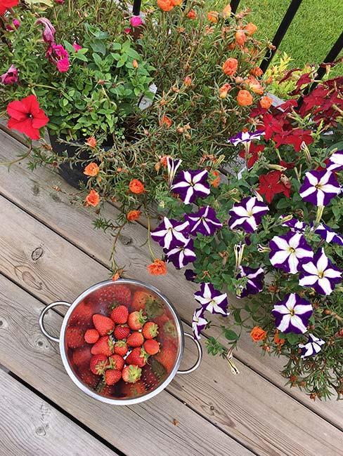 Truskawki w durszlaku na drewnainej podłodze w ogrodzie obok kwiatów