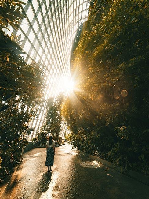 Kobieta w szklarni w ogrodzie botanicznym