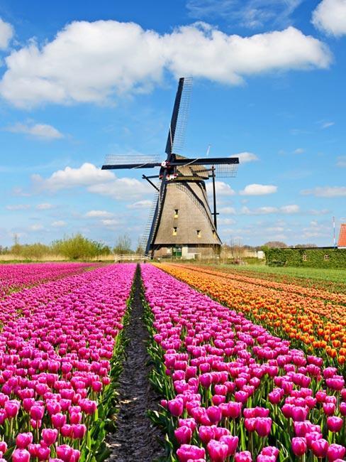 Keukenhof, Holandia