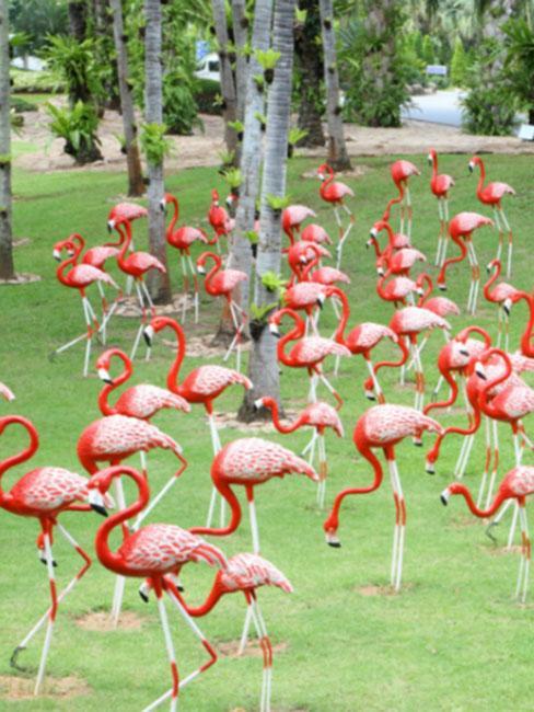 różowe flamingi w ogrodzie botanicznym Nong Nooch Tropical Botanical Garden w Tajlandii