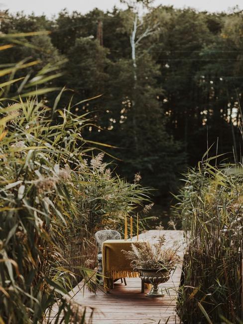 zielony ogród wśród wysokich traw dekoracyjnych
