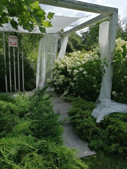 zbliżenie na krzew białych kwiatów pod namiotem weselnym