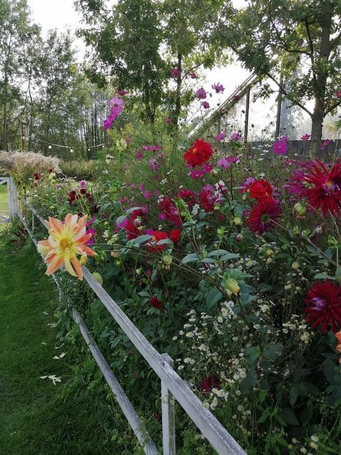 zbliżenie na kolorowe kwiaty w oranżerii