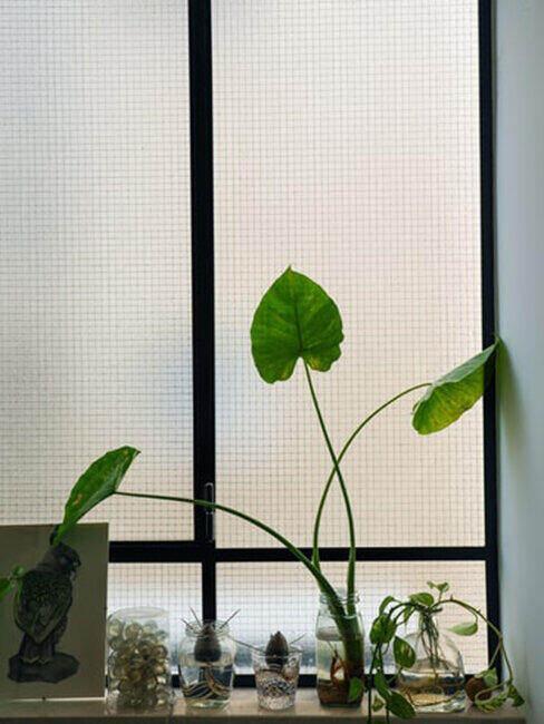 Zielony kwiatek w doniczce ze słoika, styl zero waste