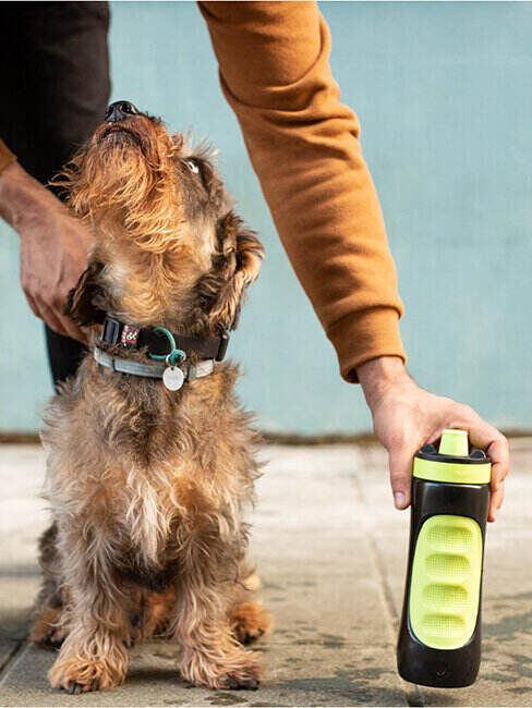 Butelka na wodę dla psa