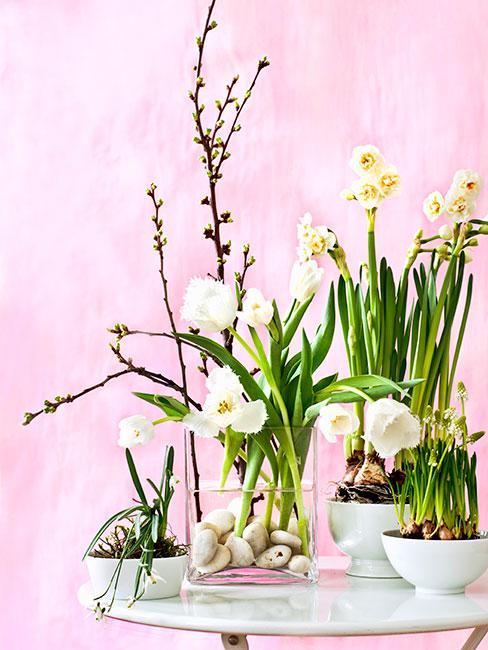 żonkile i bazie w wazonach na tle różowej ściany