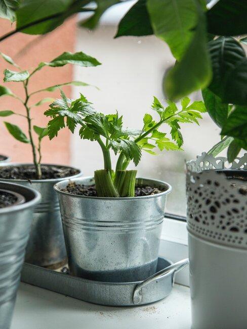 Rośliny na parapecie przy oknie