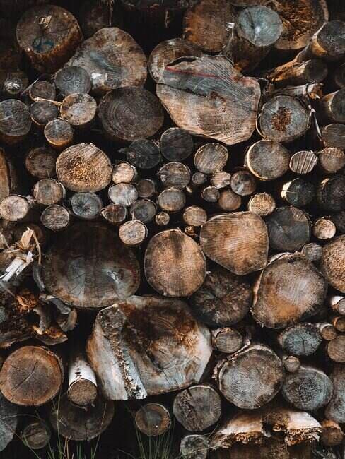 Drewno z widocznymi słojami