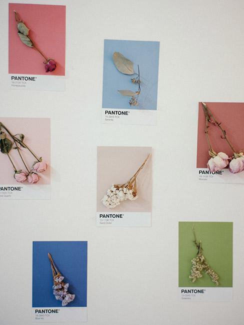 Próbki kolorów pantone na ścianie z suszonymi kwiatami