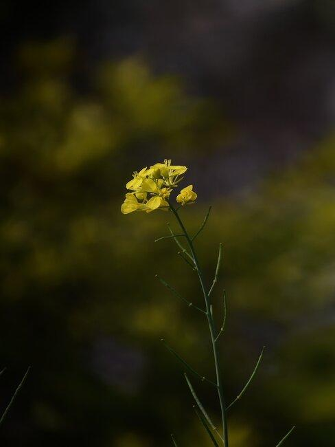 Zbliżenie na kwiat