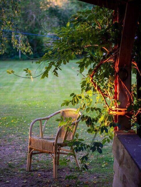 Krzesło stojące pod drzewem