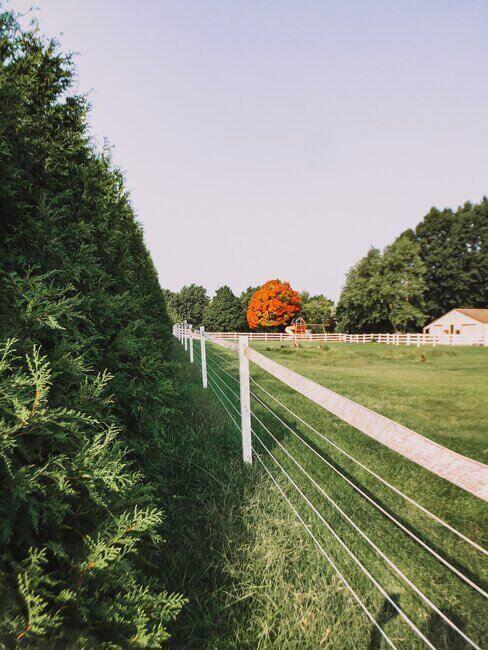Zielona zagroda, w oddali budynki i drzewa