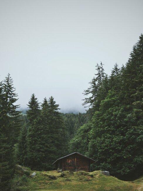 Drewiany domek w lesie