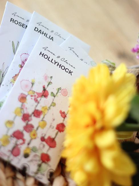 Nasiona kwiatów obok żółtego kwiatka