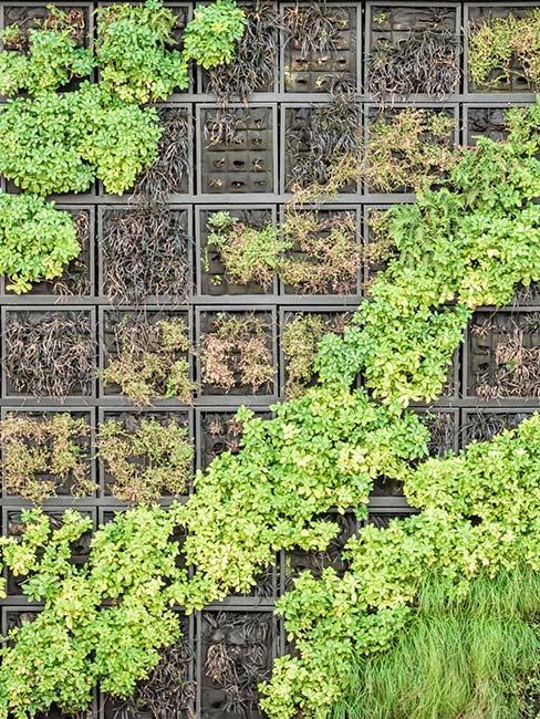 Rośliny na ścianie w formie ogrodu wertkalnego