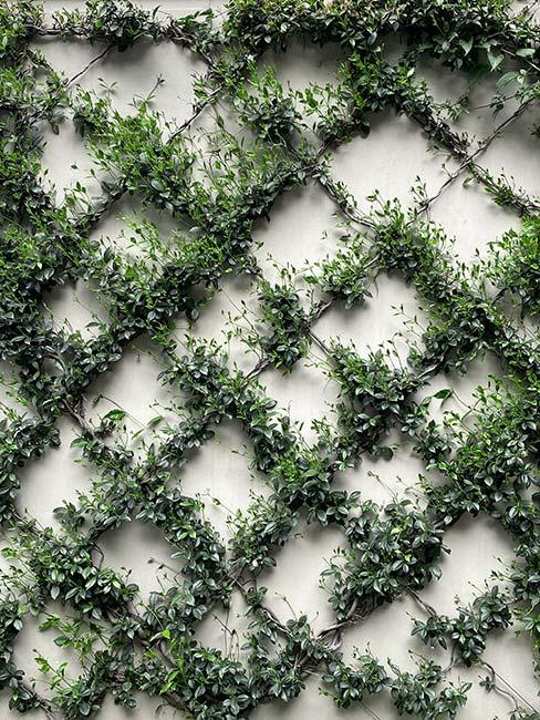 Zielone rośliny na ścianie