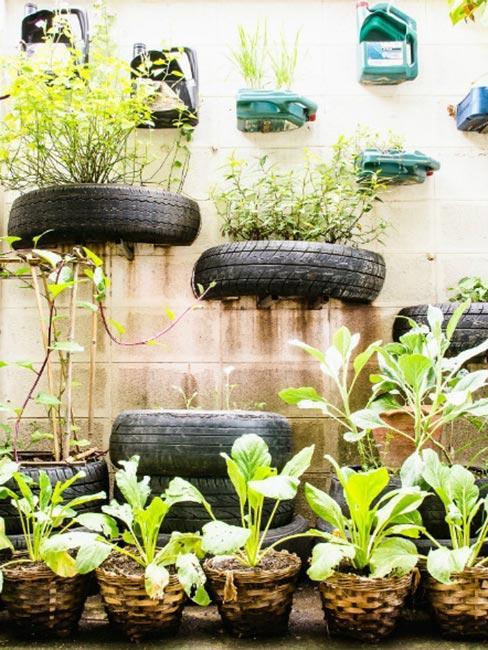 Rośliny w oponach na ścianie
