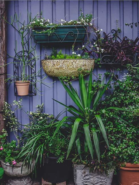 Doniczki wiszące na ścianie z zielonymi, dużymi roślinami