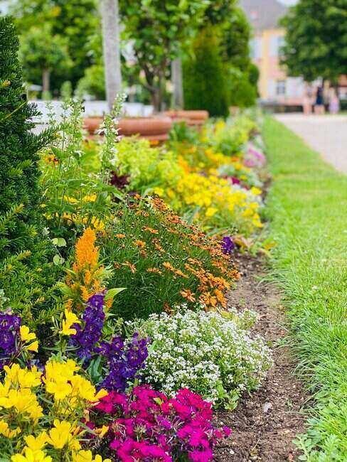 Kolorowa rabata z różnymi gatunkami kwiatów