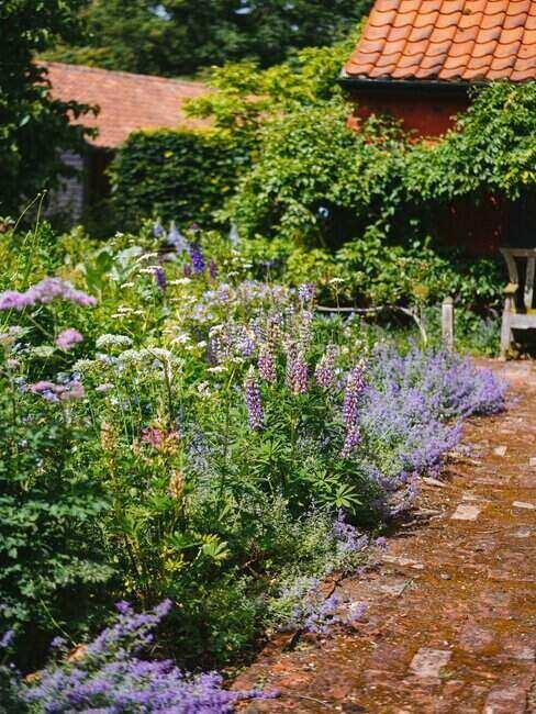 Rośliny w ogródku przydomowym