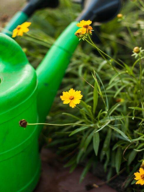 Konewka w ogrodzie