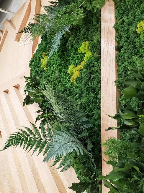 zielona ściana z mchu i paproci
