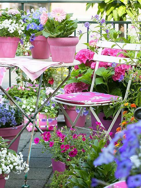 różowe i niebieskie kwiaty na balkonie z białymi metalowymi krzesłami
