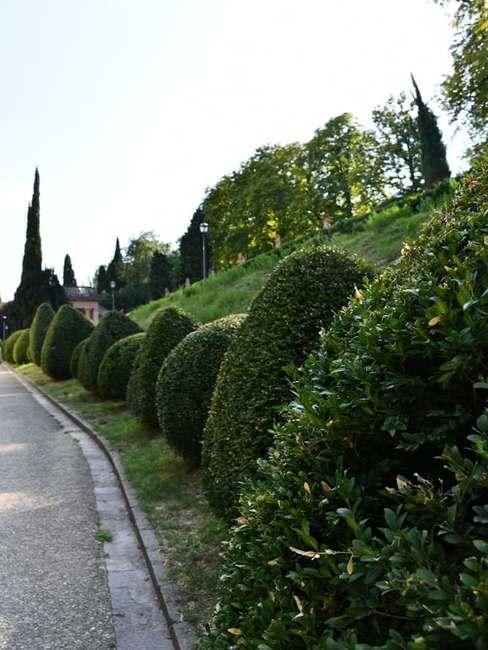 Zbocze trawnika z krzewami