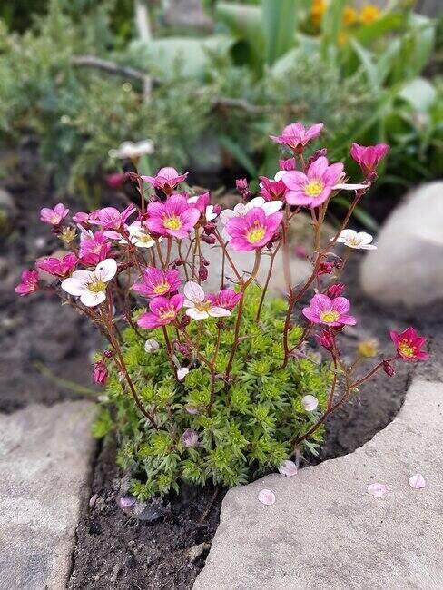 Kwiaty w dekoracji skalnej w ogrodzie