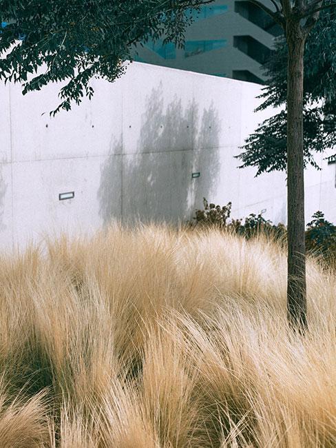 trawy ozdobne przy betonowej ścianie