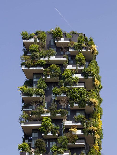 budynek spowity zielenią