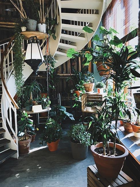 balsutrada w mieszkaniu z antresolą opleciona roślinami