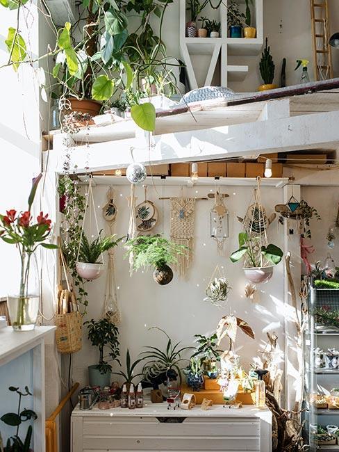 rośliny w mieszkaniu z antresolą