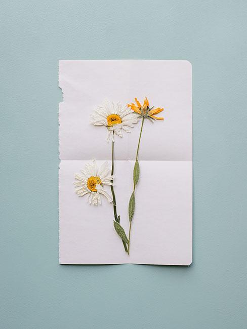 kartka na dzień mamy z suszonymi kwiatami rumianku