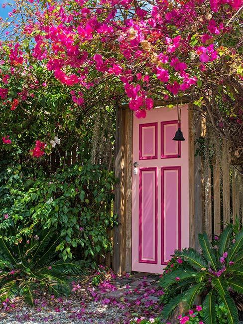 różowe drzwi wejściowe otoczone różowymi kwiatami