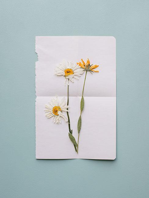 Kartka z żywymi kwiatami polnymi