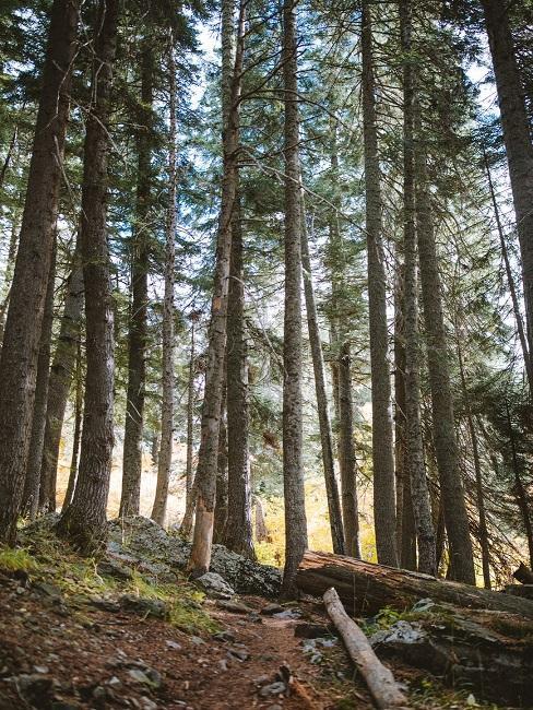 Wyjazd na weekend do lasu