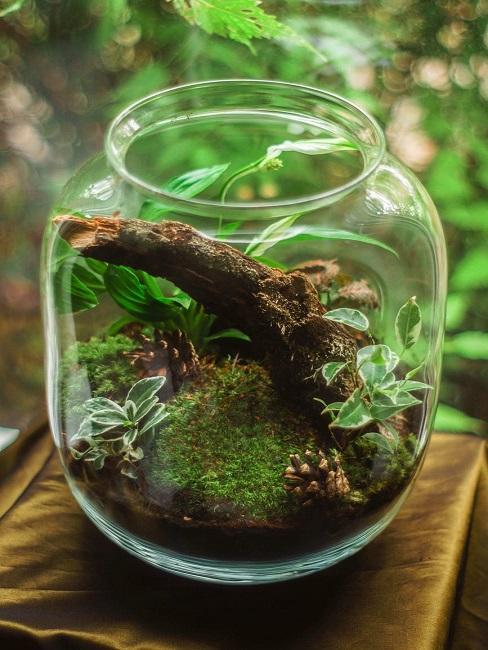 Las w słoiku jako prezent na 80 urodziny