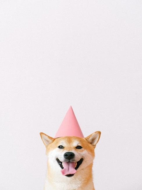 Pies z czapeczką urodzinową