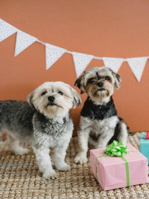 Psy z prezentami