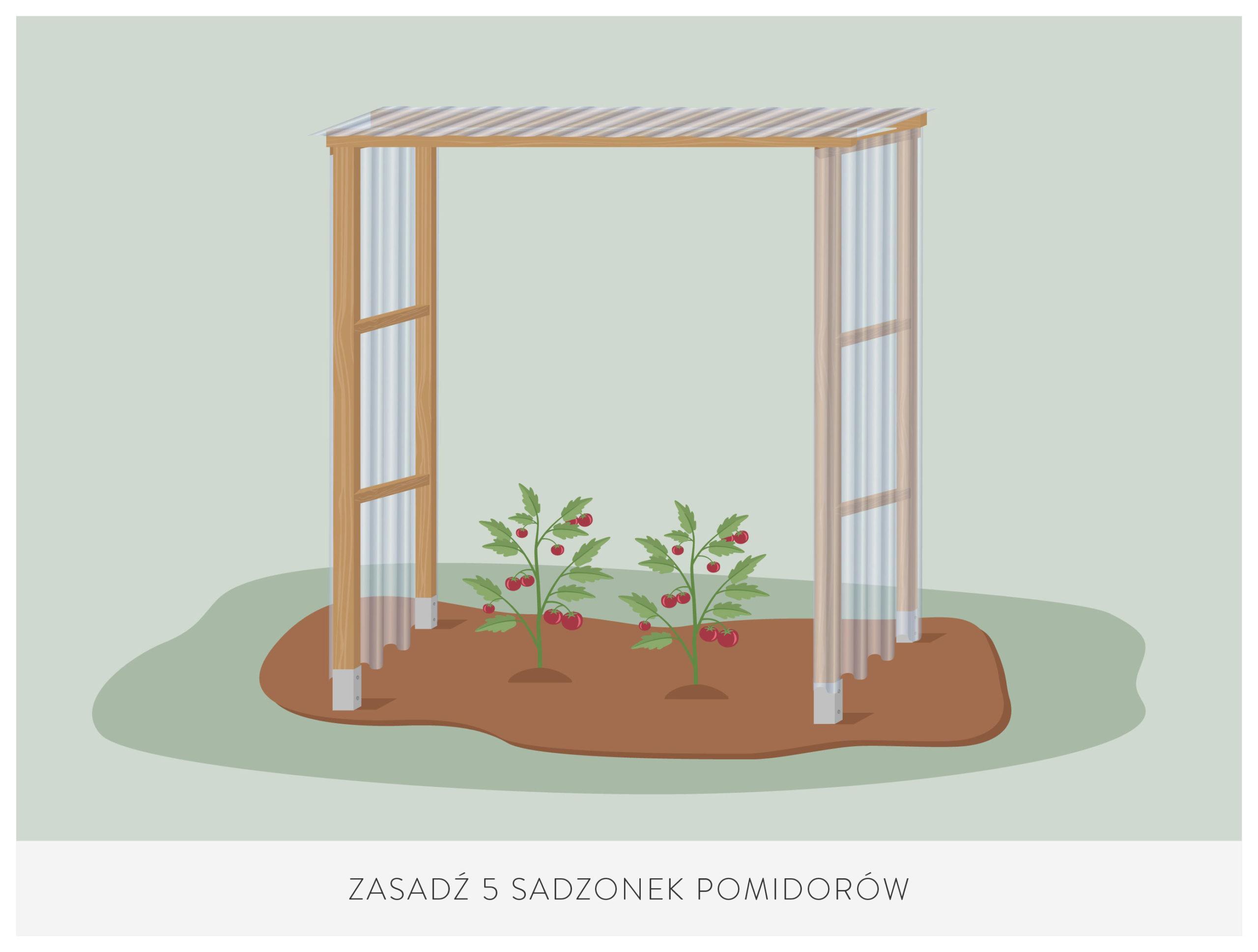 jak sadzić pomidory pod daszkiem krok po kroku