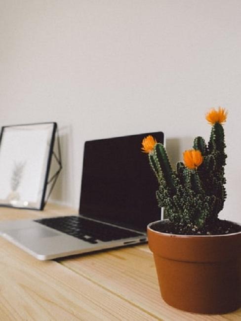 Laptop i kaktus na biurku