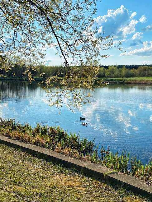 Widok na jezioro otoczone drzewami i krzewami