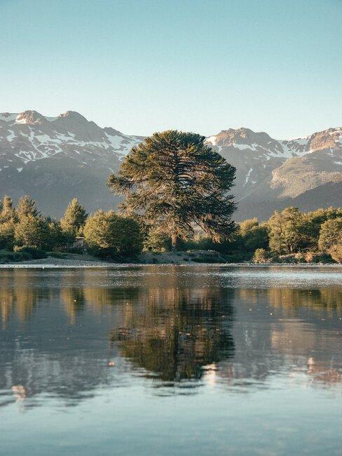 Widok na drzewo rosnące nad jeziorem
