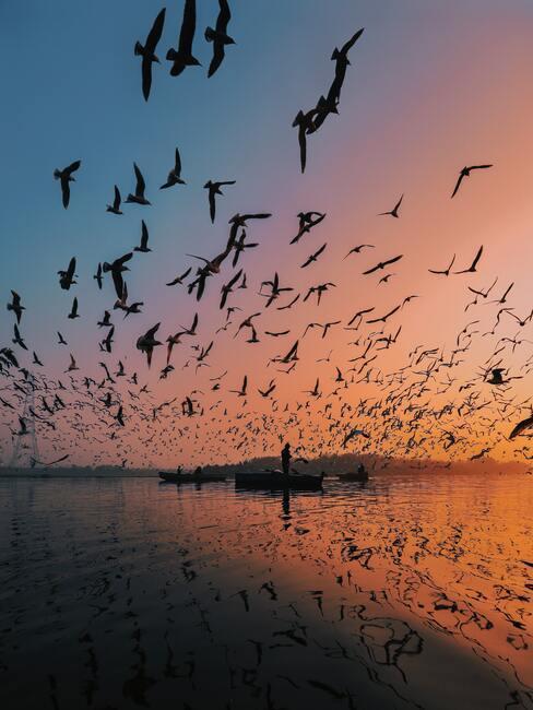 Klucz ptaków nad jeziorem