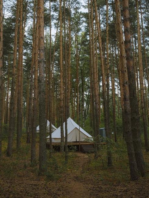 Glampingowy namiot w lesie