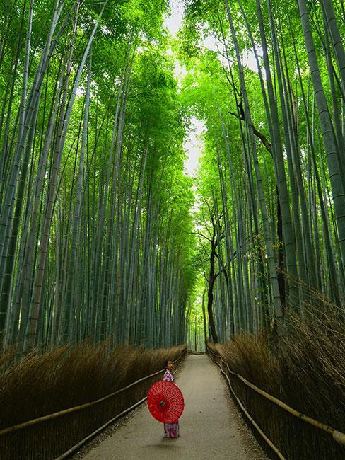 Postać w wysokim lesie
