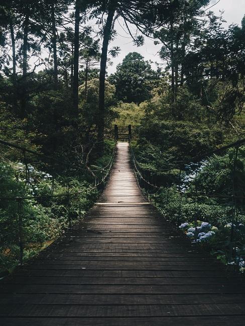 Most w środku lasu