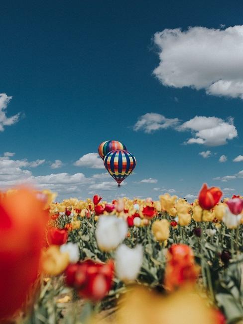 Tulipany na tle latającego balonu jako prezent na 3 rocznice ślubu