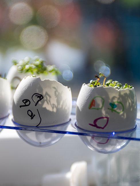 rzerzucha w skorupkach po jajkach DIY dla dzieci